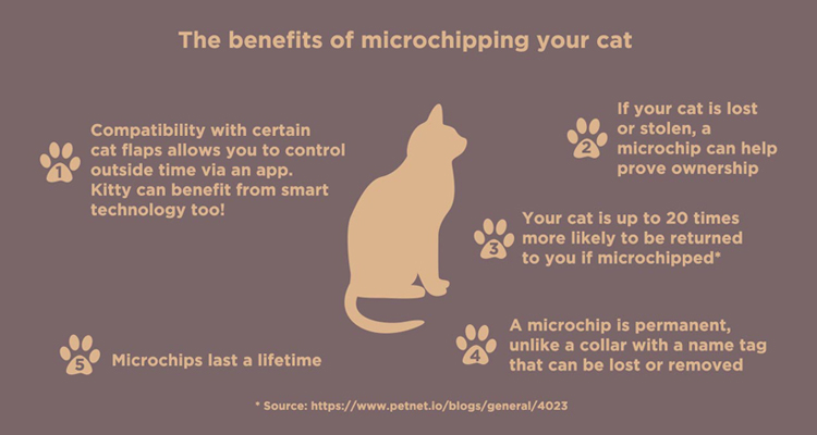 Why Microchip Cats